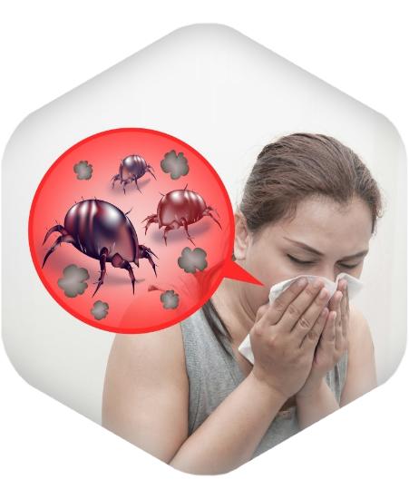 tovary-dlya-borby-s-allergiey-astmoy-i-pylevymi-kleshchami-kupit-v-sochi